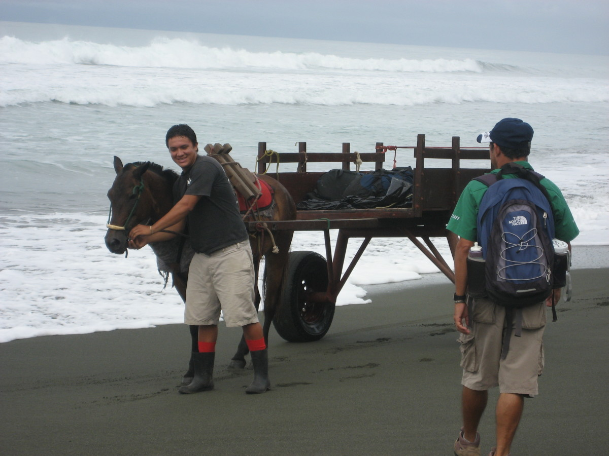 A horse cart on the beach in Carate