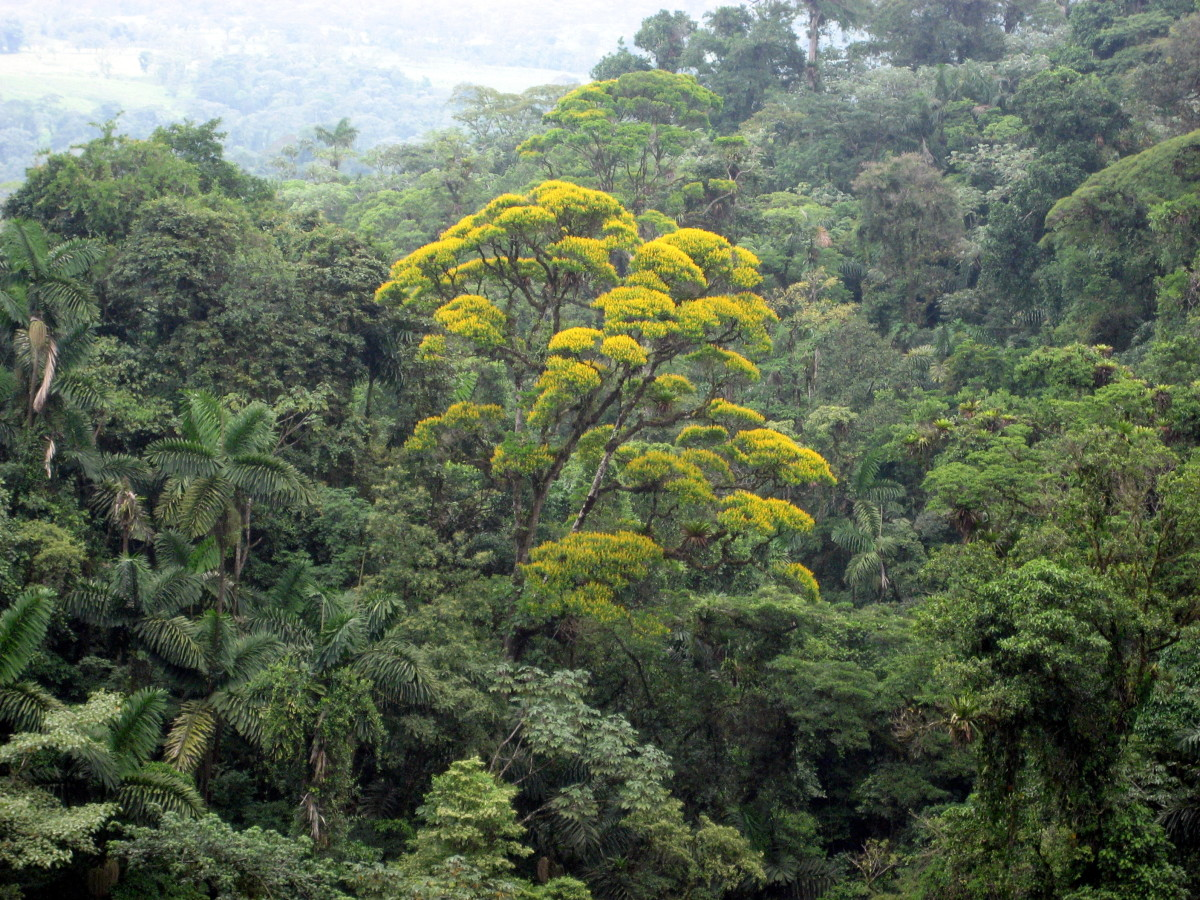 The lush rainforest around Arenal Volcano