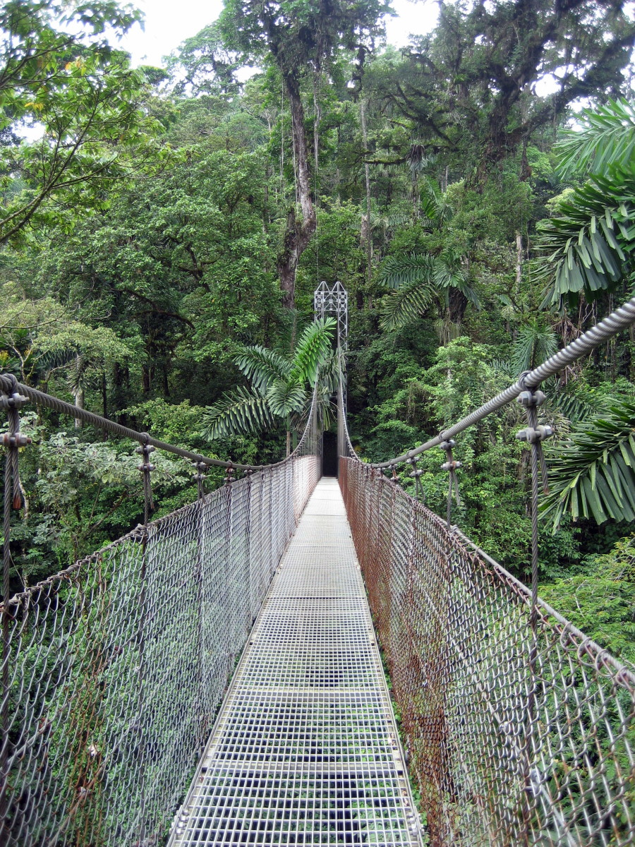 One of the Hanging Bridges of Arenal
