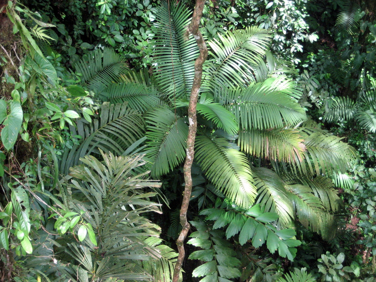 A view of the jungle canopy from above.