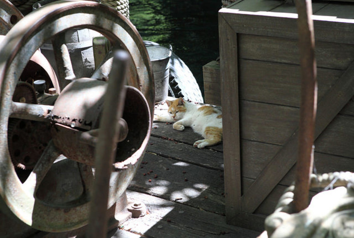 One of the cats taking a rest from catching mice on a dock alongside the Jungle Cruise.