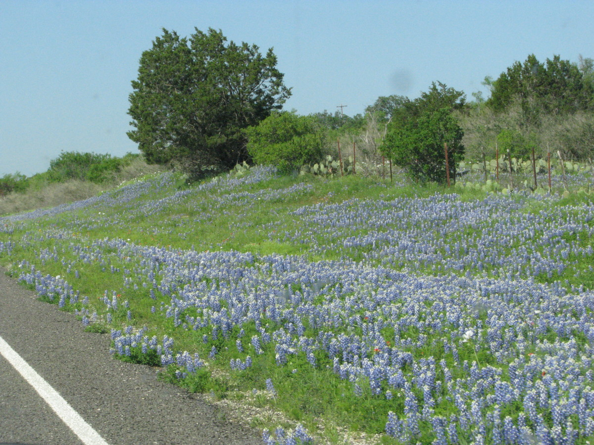 Roadside Wildflower Driving in Texas!