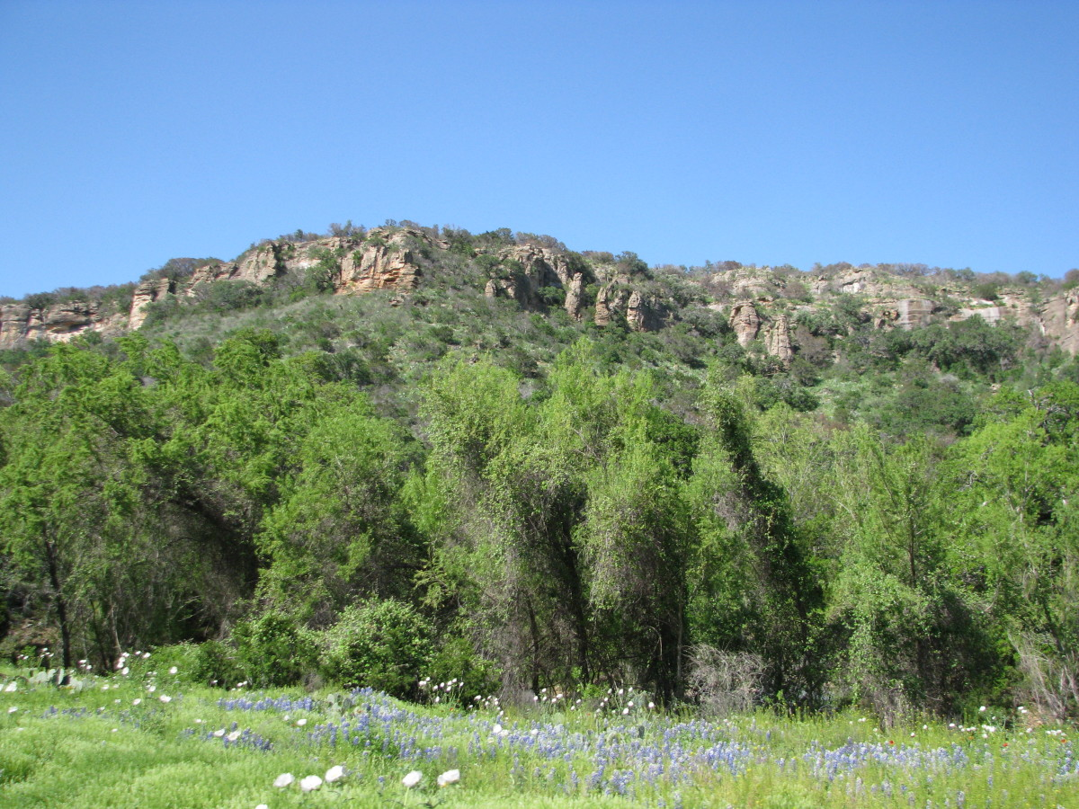 Bluebonnets against the mountain scenery.
