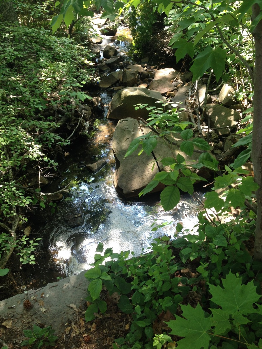 A brook meandering through the Palisadeos trail.