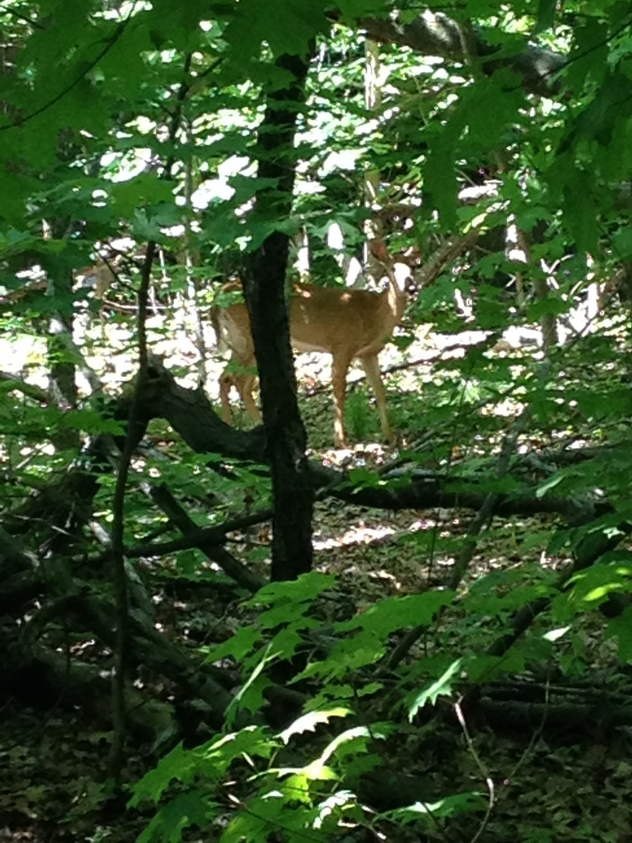 I spotted a deer hiding while hiking on what was probably the most relaxing day trip from NYC I had ever taken.