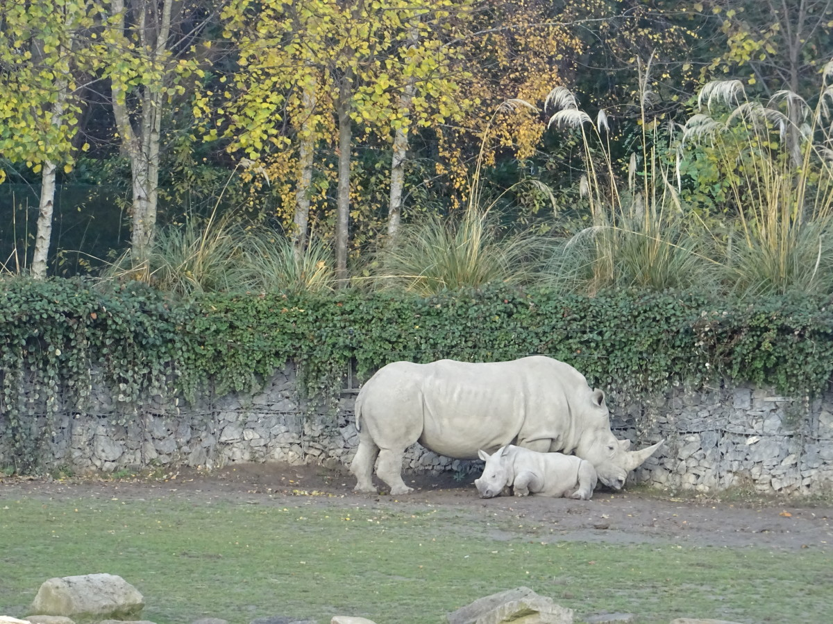 You can see a lot of rare sights in the Dublin zoo.