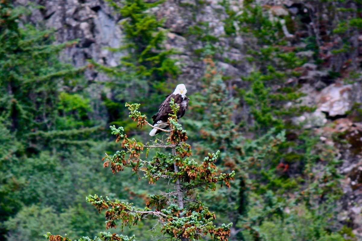 Eagle sightings on ferry ride