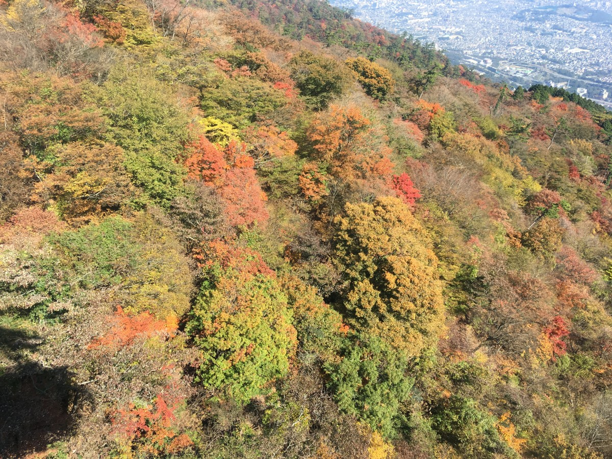 The view going up on the Kintetsu Ropeway (Nov. 6, 2017).