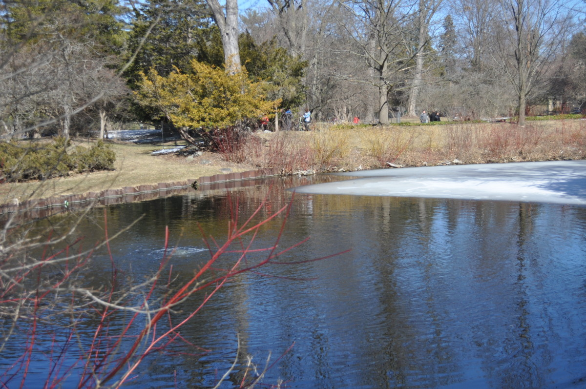 This half frozen pond is beautiful in late winter, even more so in Michigan's other 3 extreme seasons.