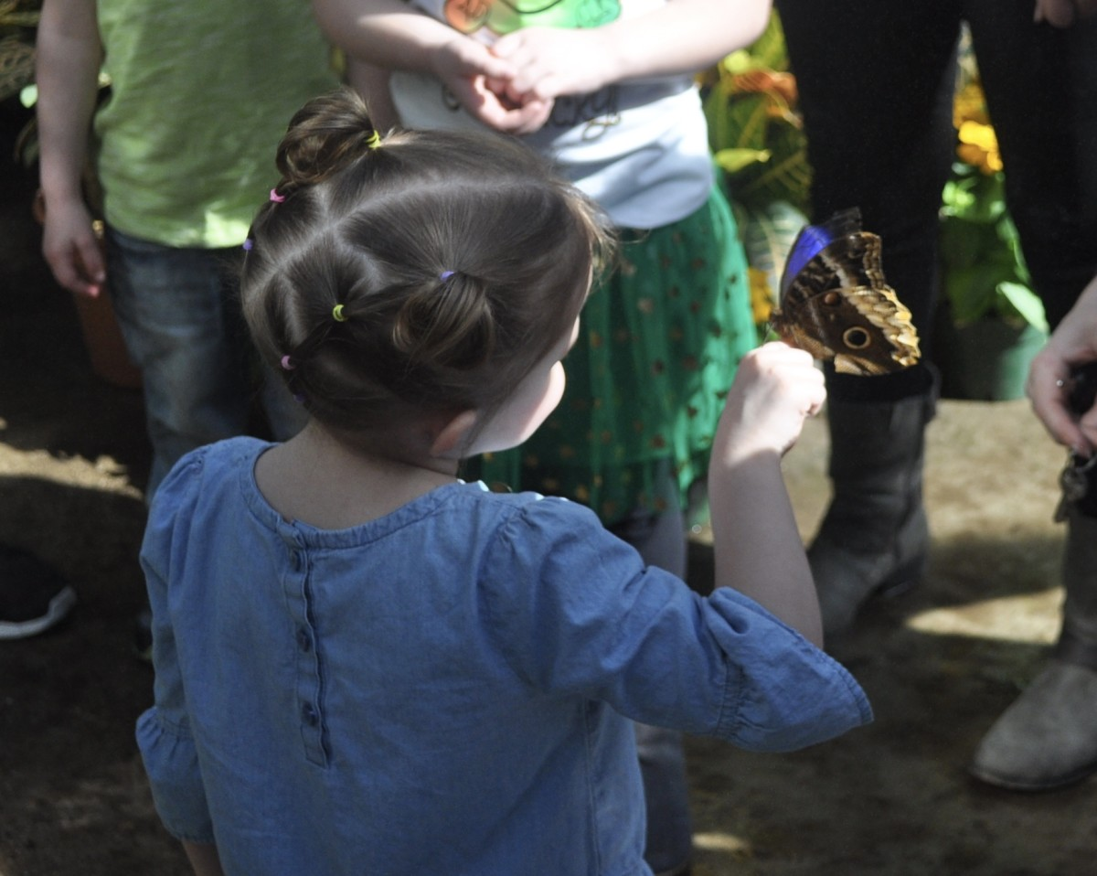 I think this photo captures the wonder of a child.  I think this is why I come.  I've seen butterflies all my life, but I love to see them anew through the eyes of a child.