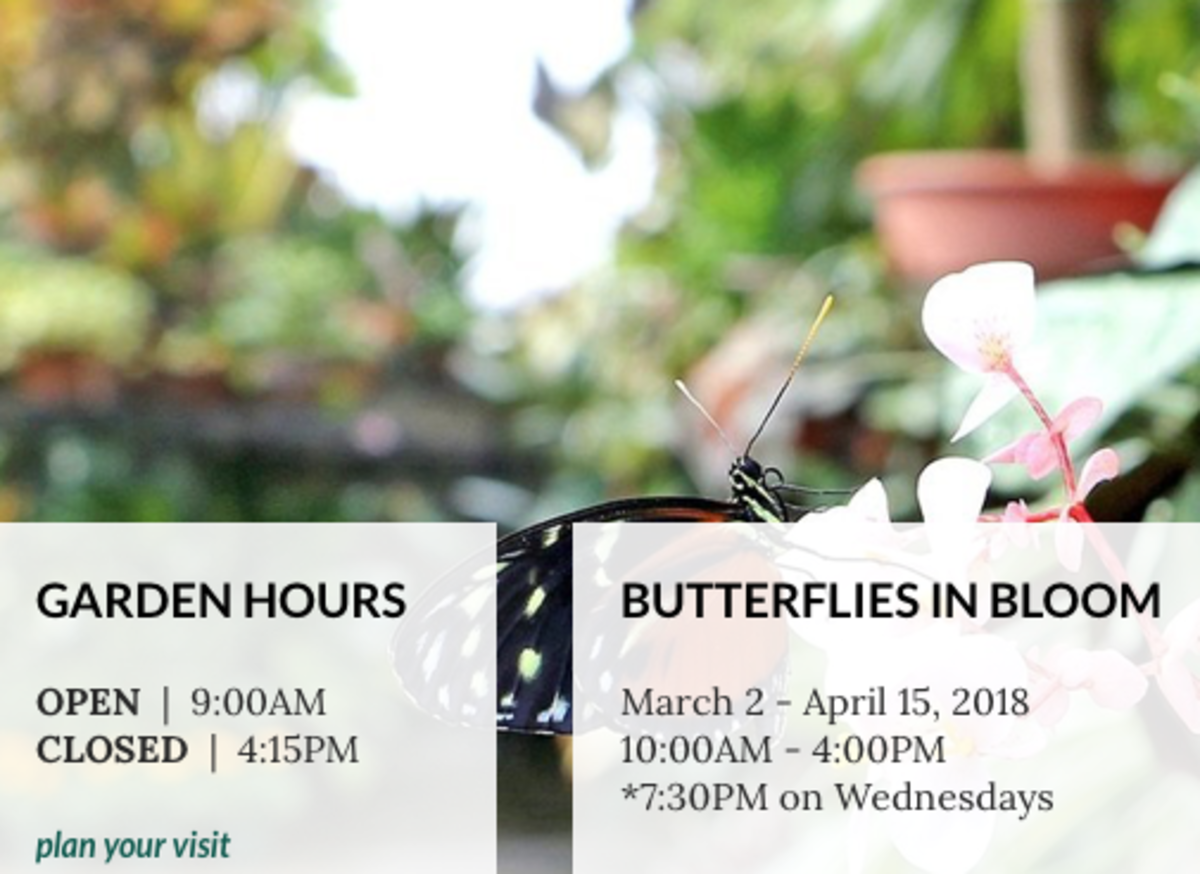 Butterflies In Bloom Is Featured Annually From March 2nd Through April 15th