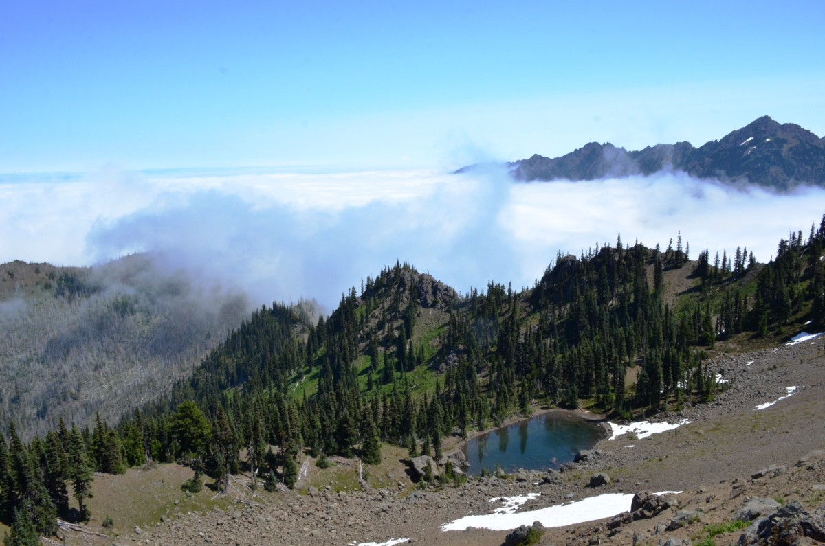 Above the clouds on the Hurricane Hill Trail @ Olympic National Park