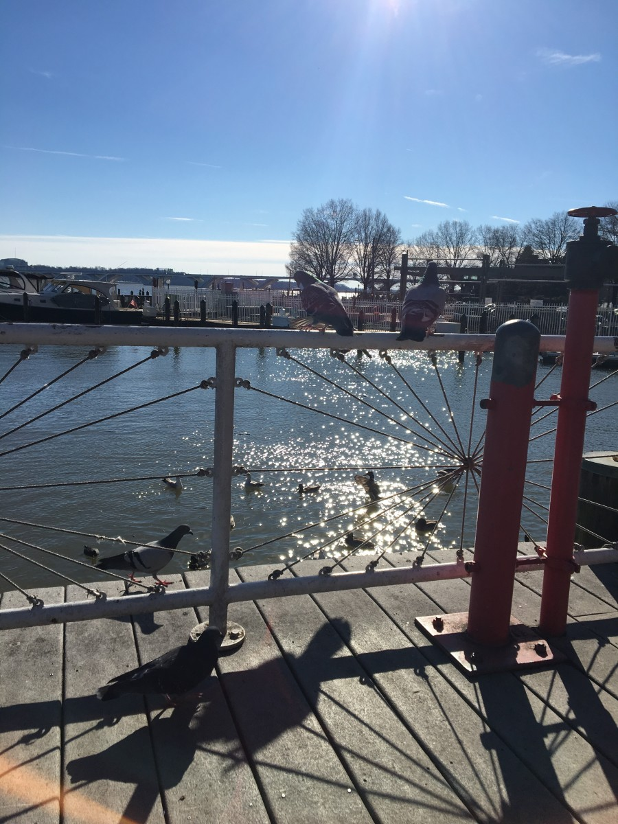 Old Town Alexandria's waterfront is a nice place to take a break, especially on a sunny winter's day.