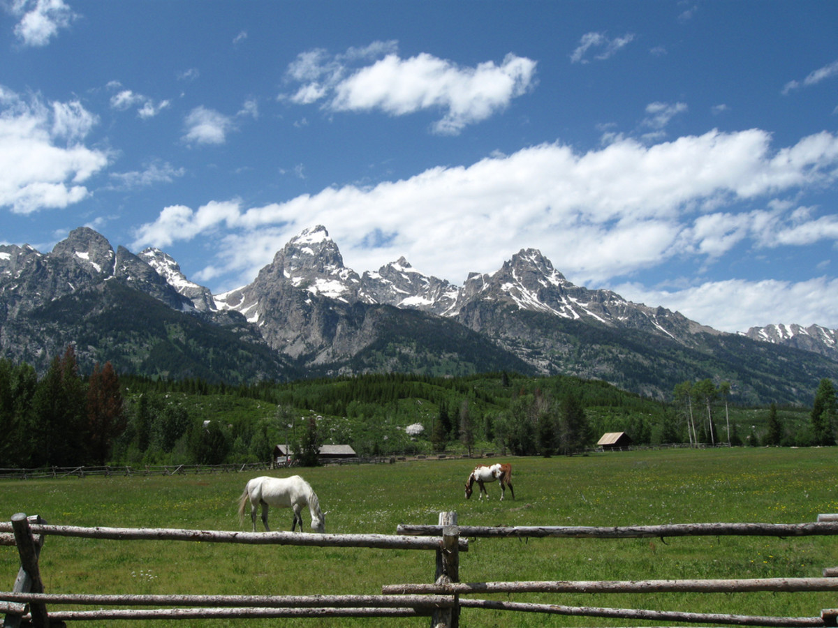 Horses Grazing below the Tetons near Taggart Lake in Grand Teton National Park, Wyoming