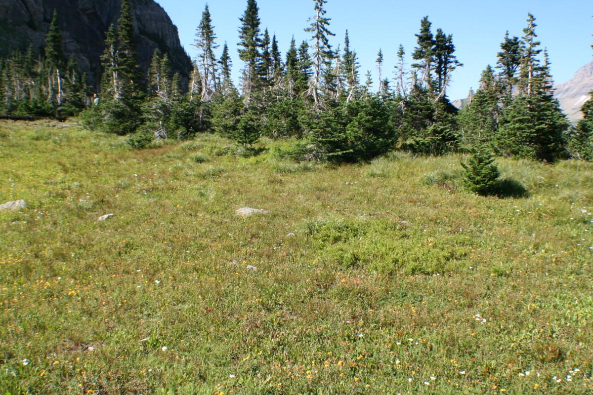 Grassy mountainside