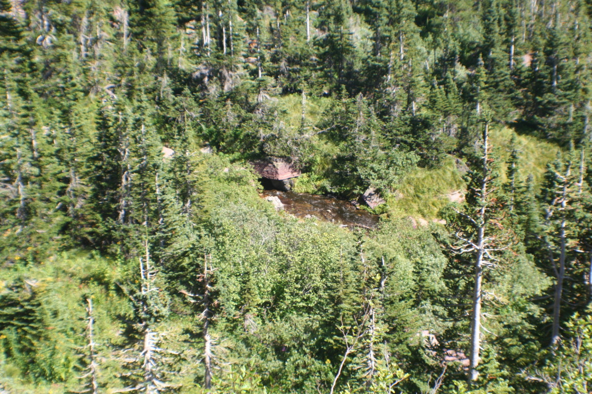 Wildlife on a mountainside.  Can you find Waldo?