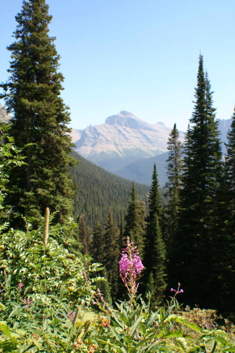 Mountains, forest, and flower