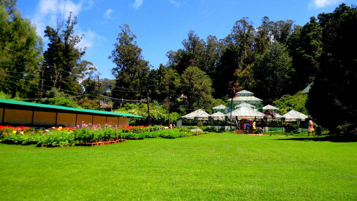 A Green Carpet at Ooty's Botanical Gardens