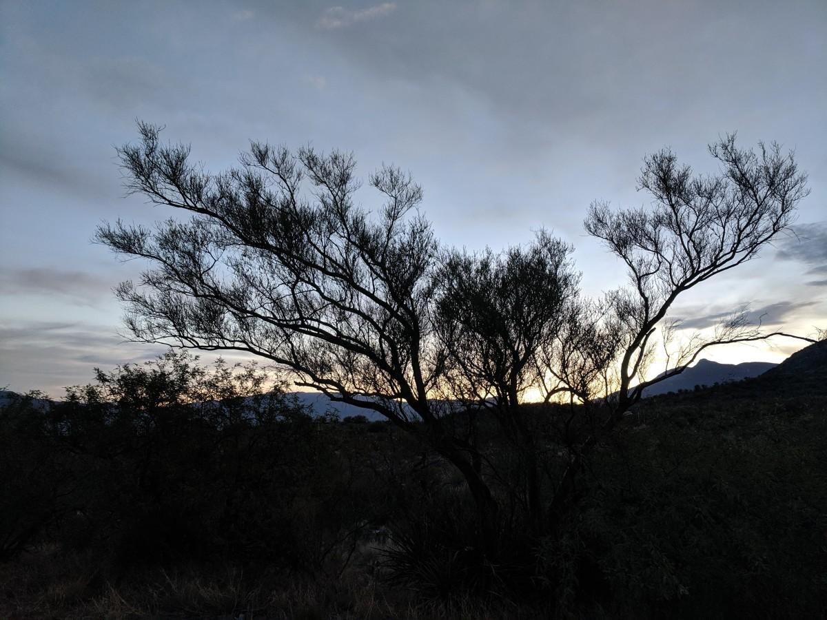 Pre-dawn sky as Arizona's Sonoran Desert begins a new day