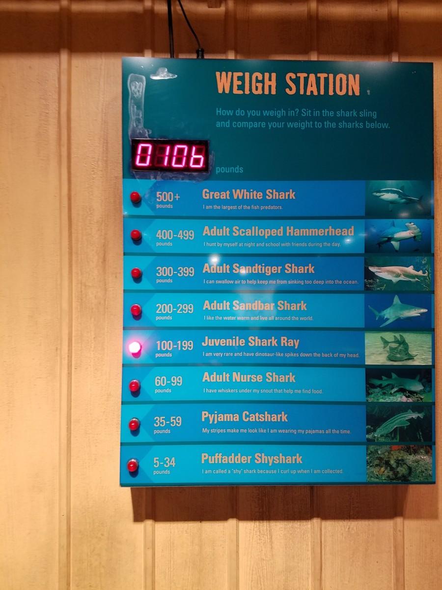 visiting-kentuckys-newport-aquarium-shark-encounters-and-more