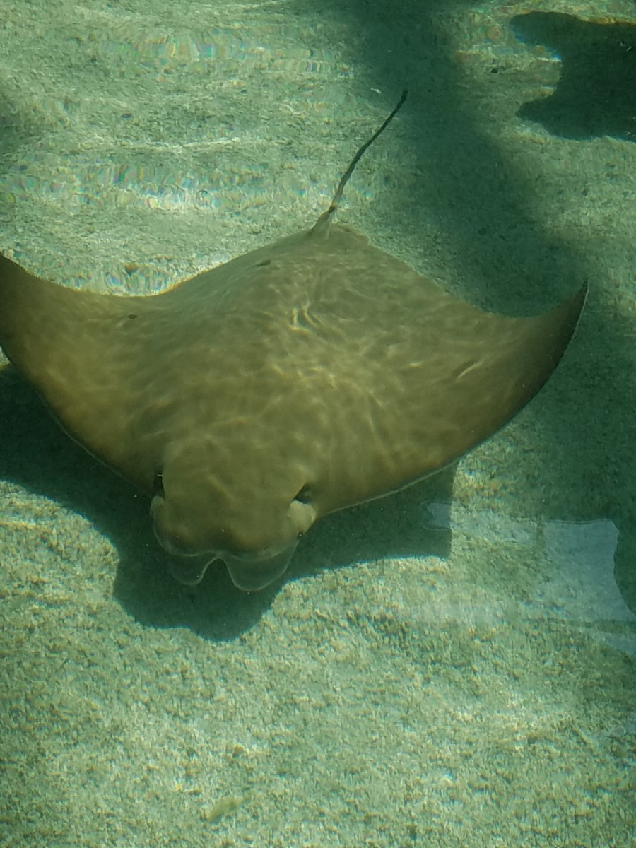 Are sting rays slimy or spongy to the touch?  Find out for yourself!