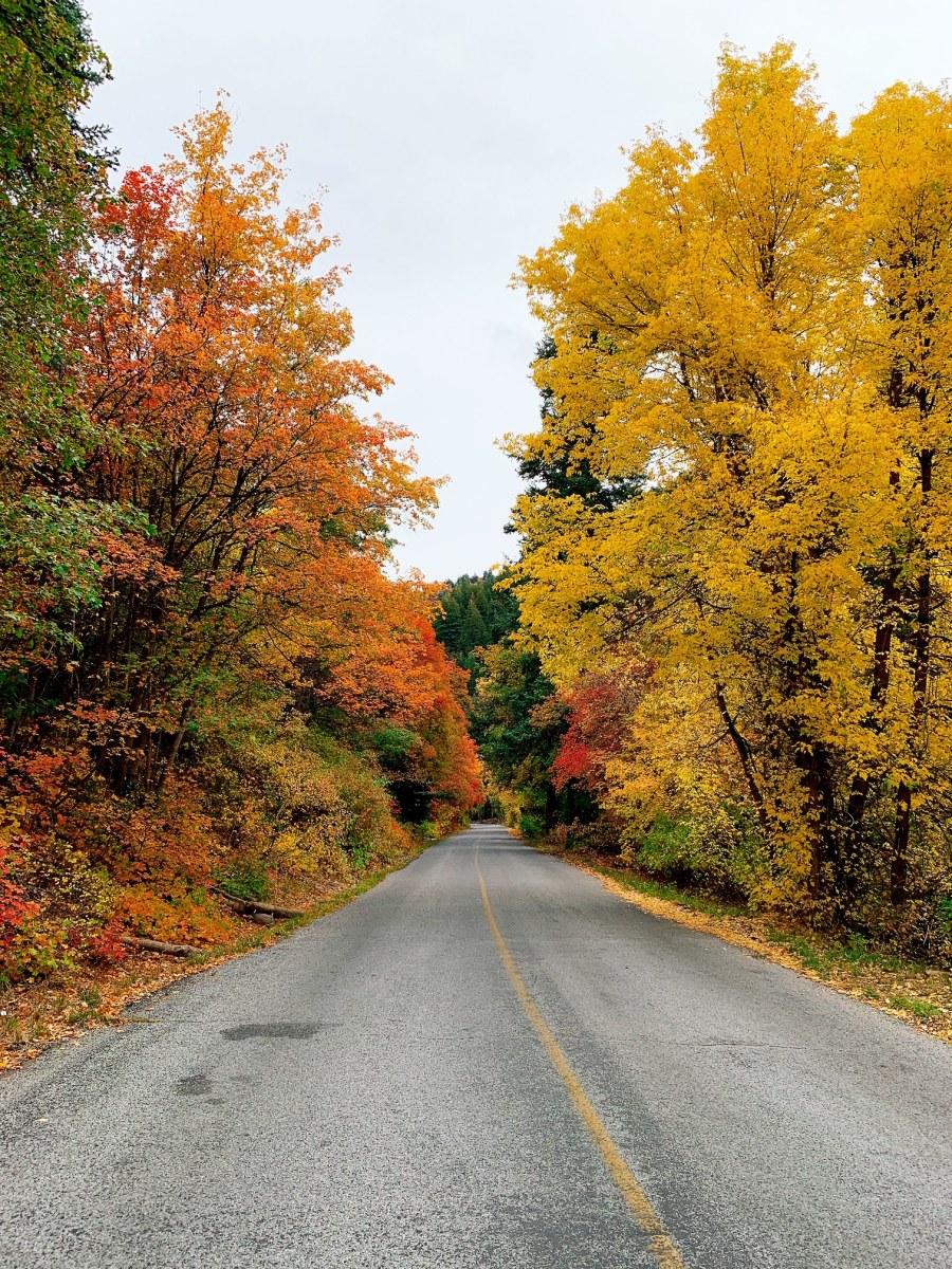 Millcreek Canyon in Fall