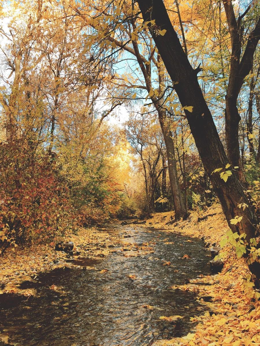 Creek Through Millcreek Canyon in Fall