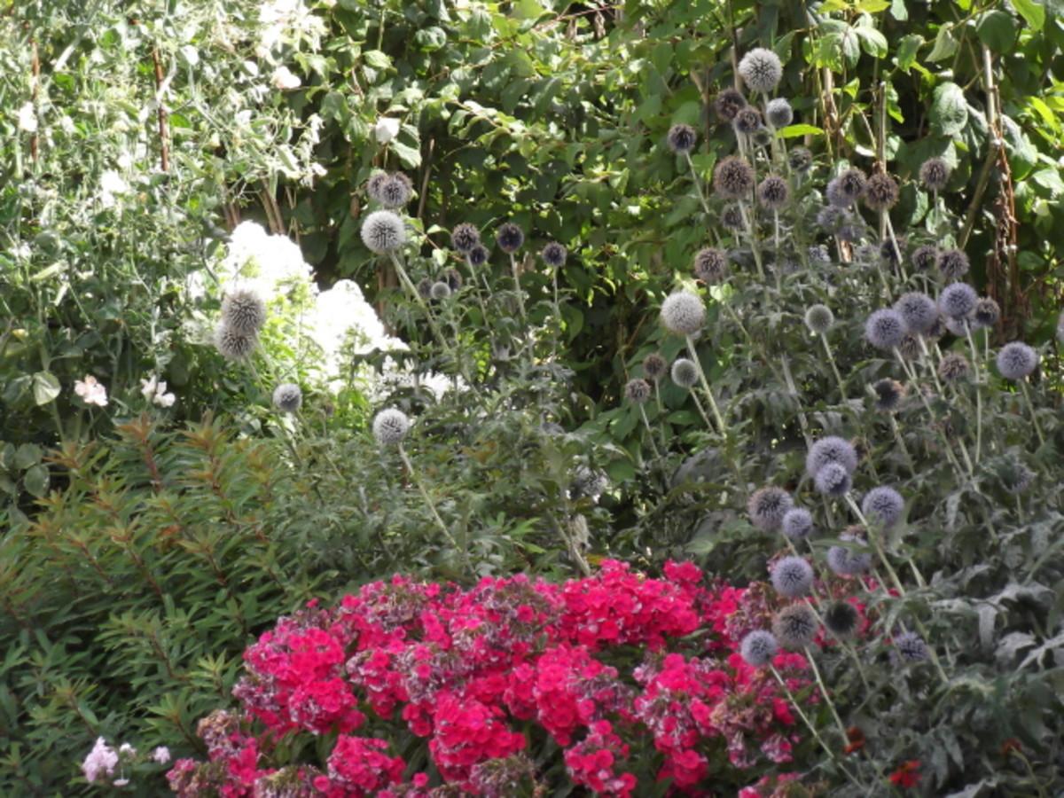 Flowerbed in the Dublin Botanic Gardens