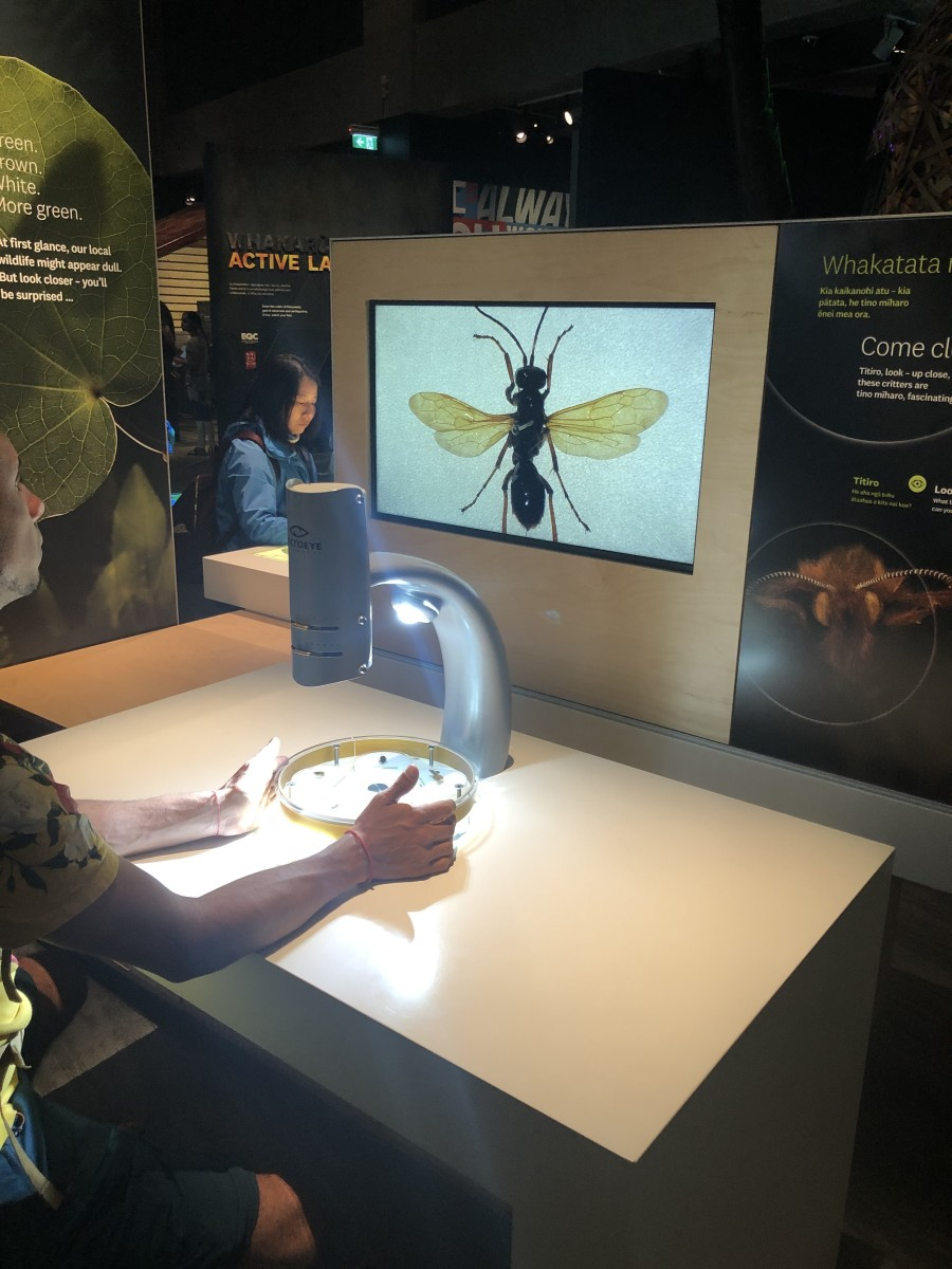 One of the Many Interactive Displays
