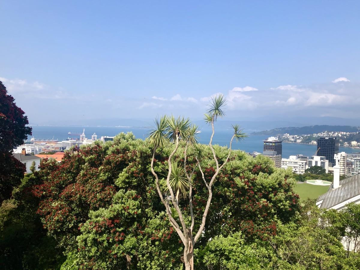 Marvellous Views Over Wellington Harbour