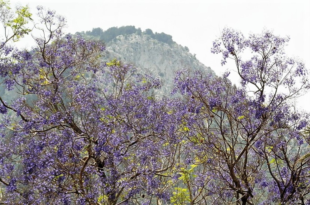 The Kyrenian mountain range.