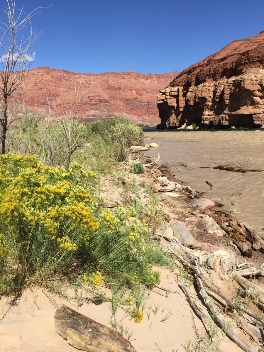 View along west bank of Colorado River.  The river is about 2 miles across the empty land to the east of Cliff Dweller Lodge