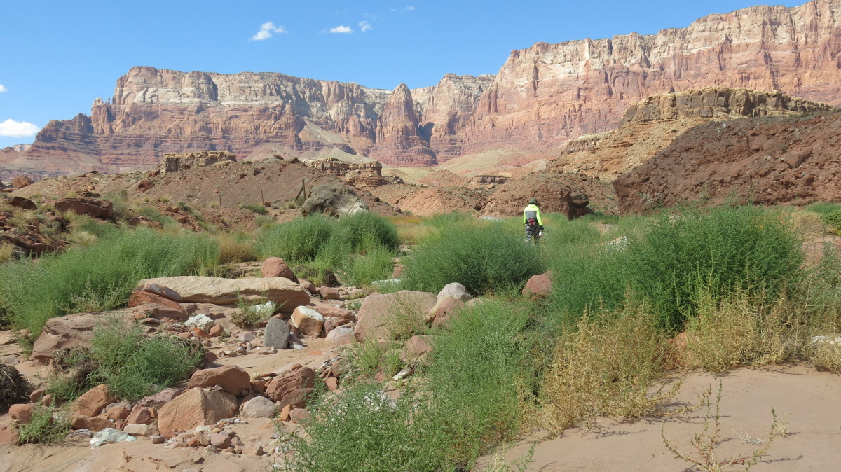 My wife hiking & exploring cliffs in Cathedral Wash area north of Navajo Bridge in Marble Canyon AZ