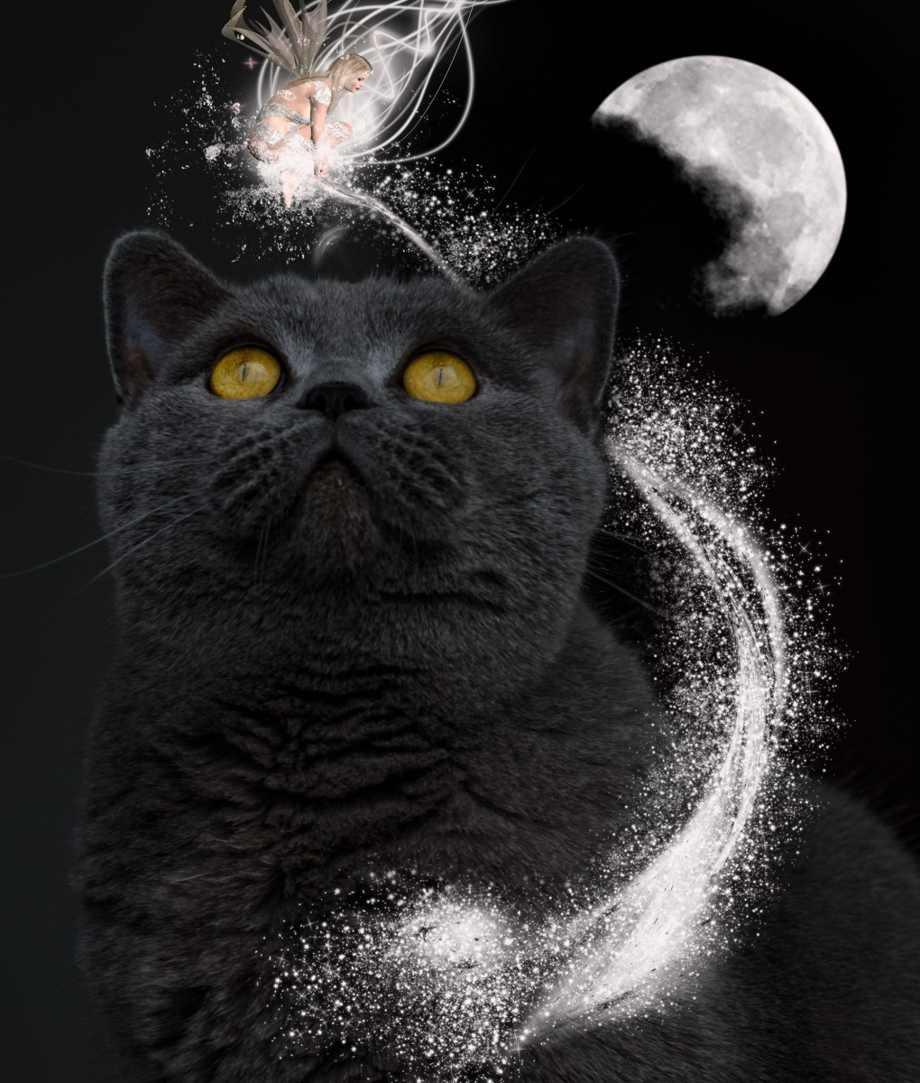 cats-in-a-dream-the-meaning-of-cats-as-dream-symbols