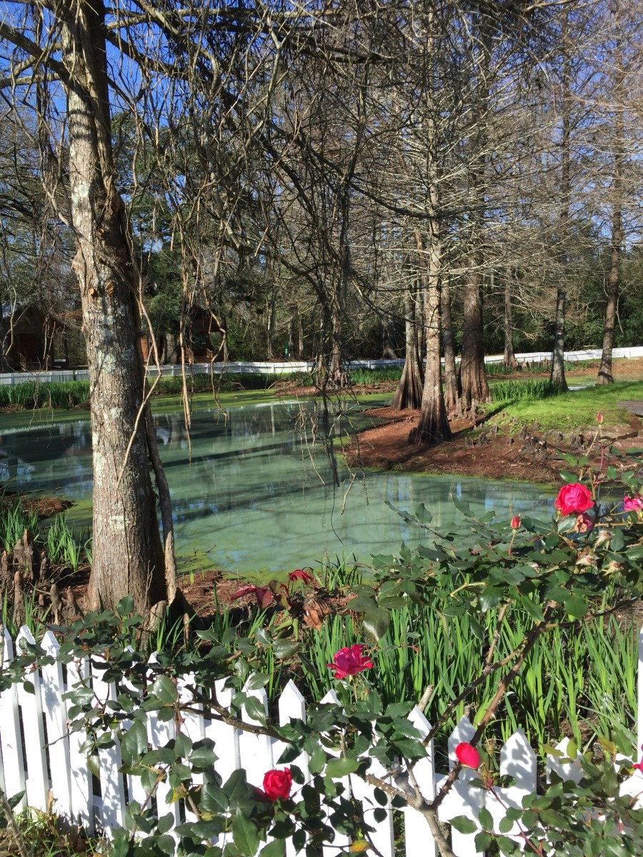 The Myrtles pond