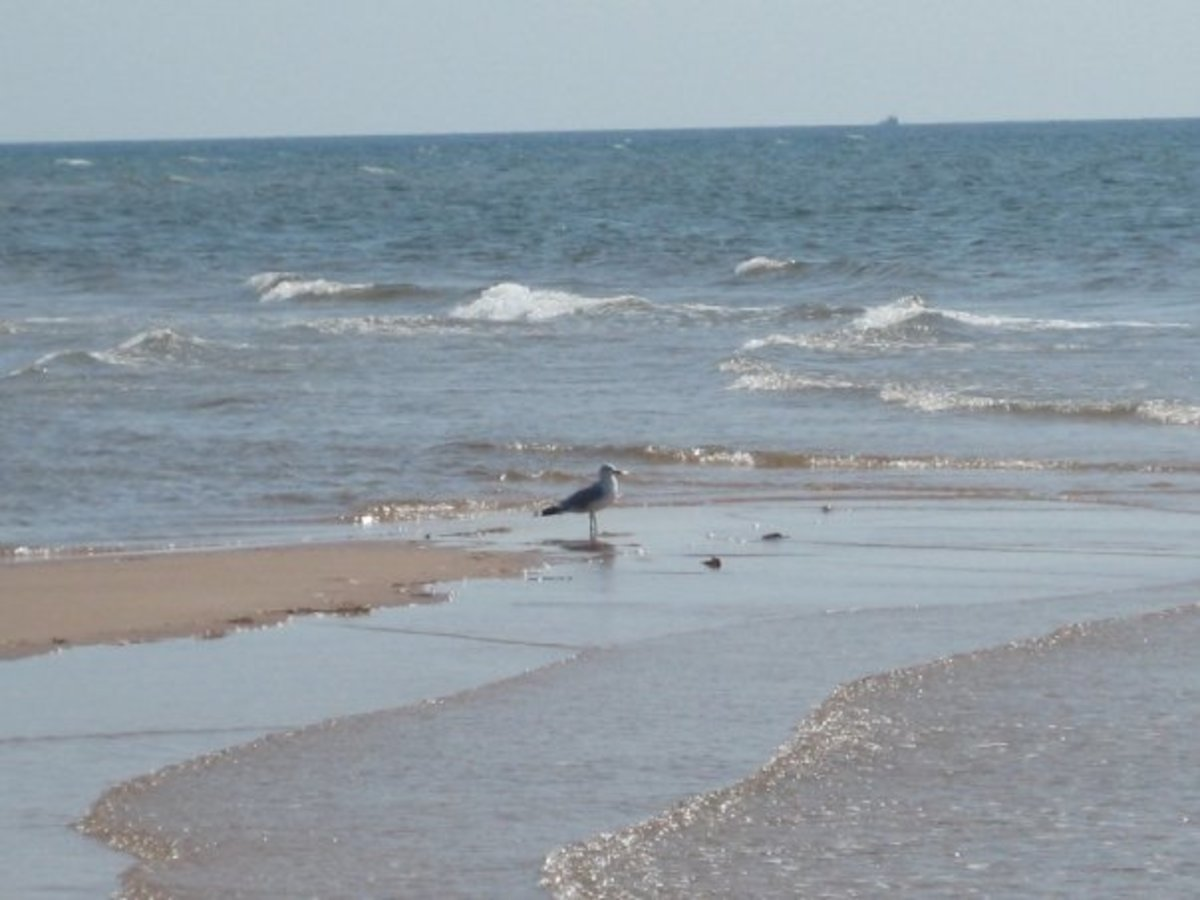 Seagull on the beach in PEI.