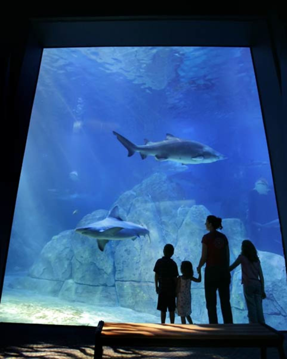 Adventure Aquarium in nearby Camden, NJ lets you swim with the sharks and play with the seals
