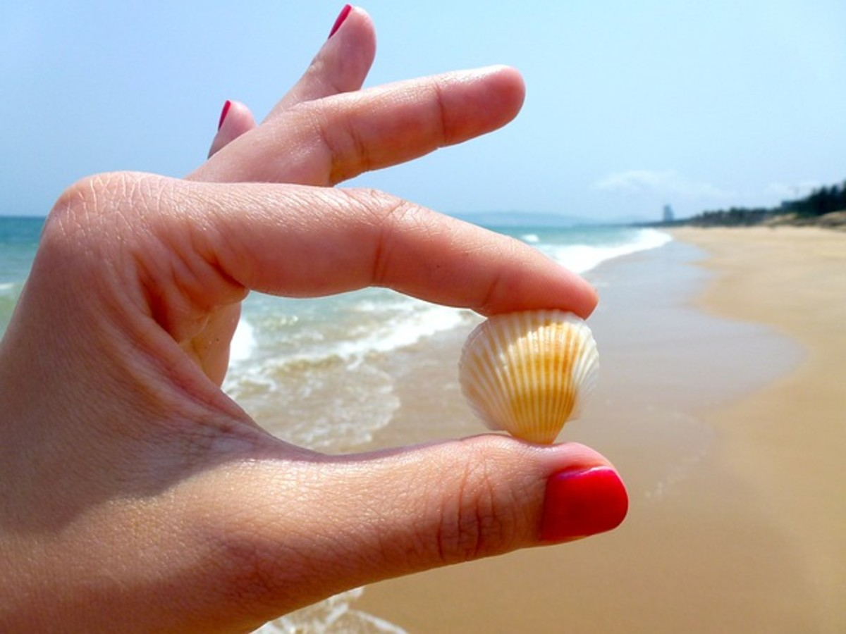 The beach is full of beautiful and hidden seashells.