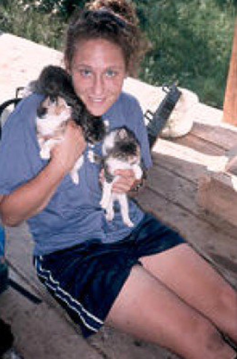 Ramkitten with kittens at a hostel near the Appalachian Trail