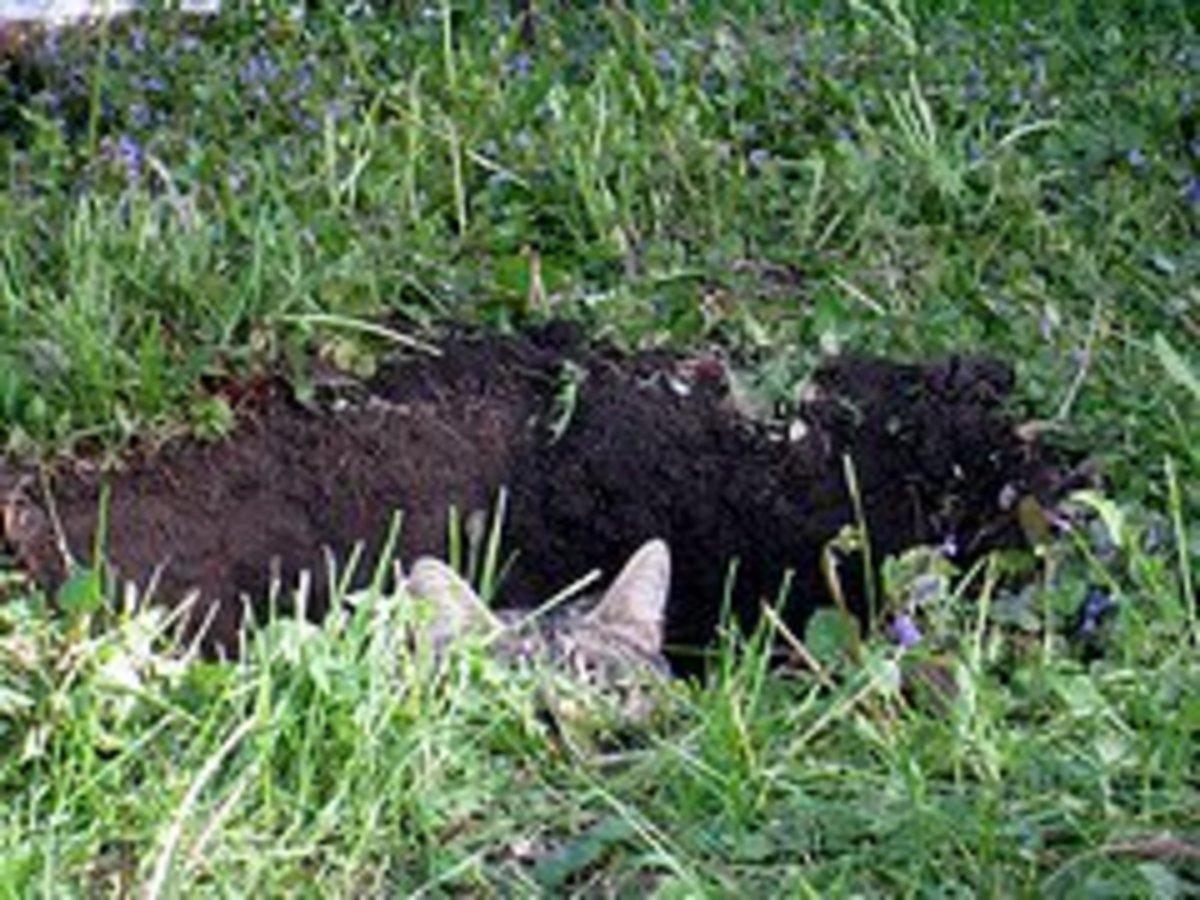 A cat hole.