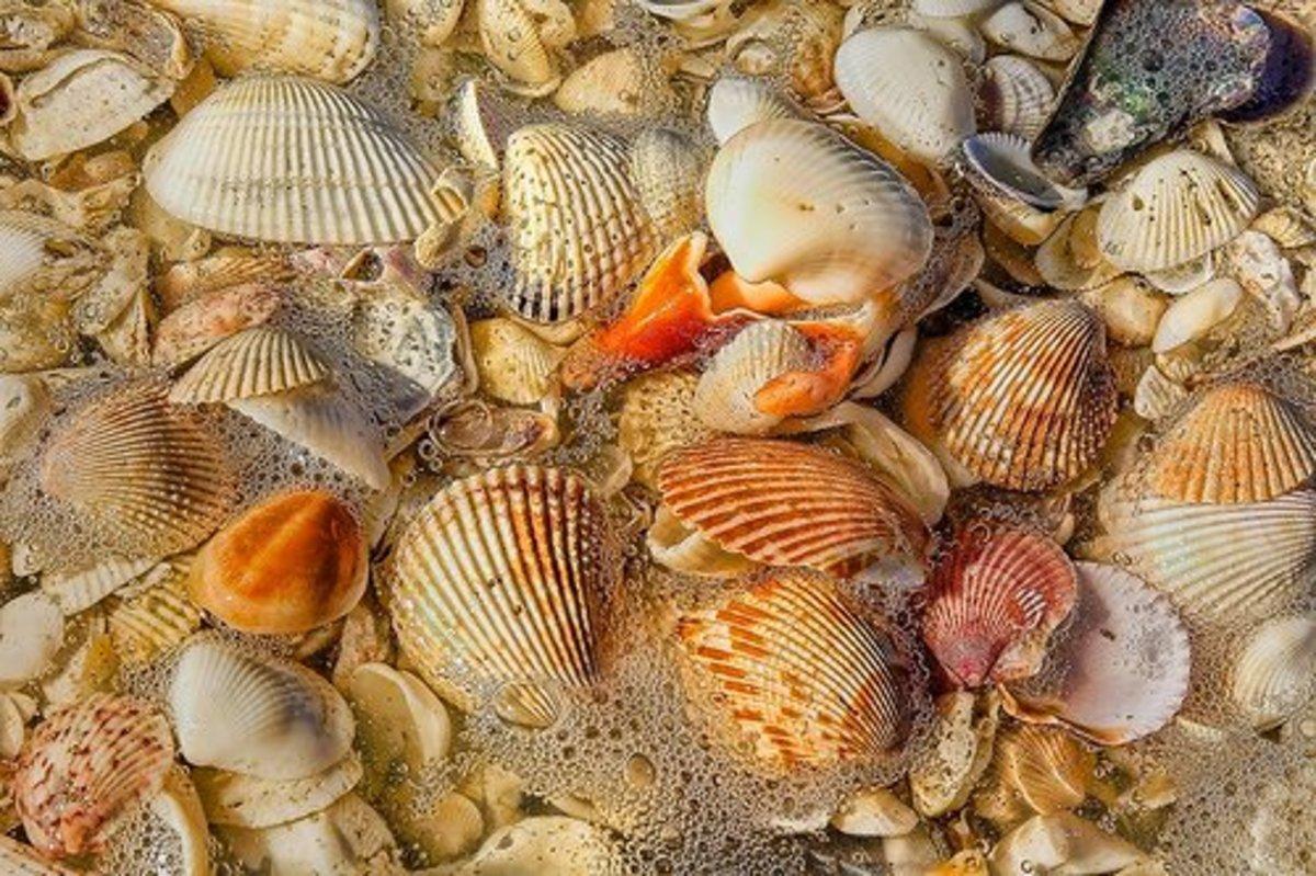 Sea Shells on Sanibel Island, Florida