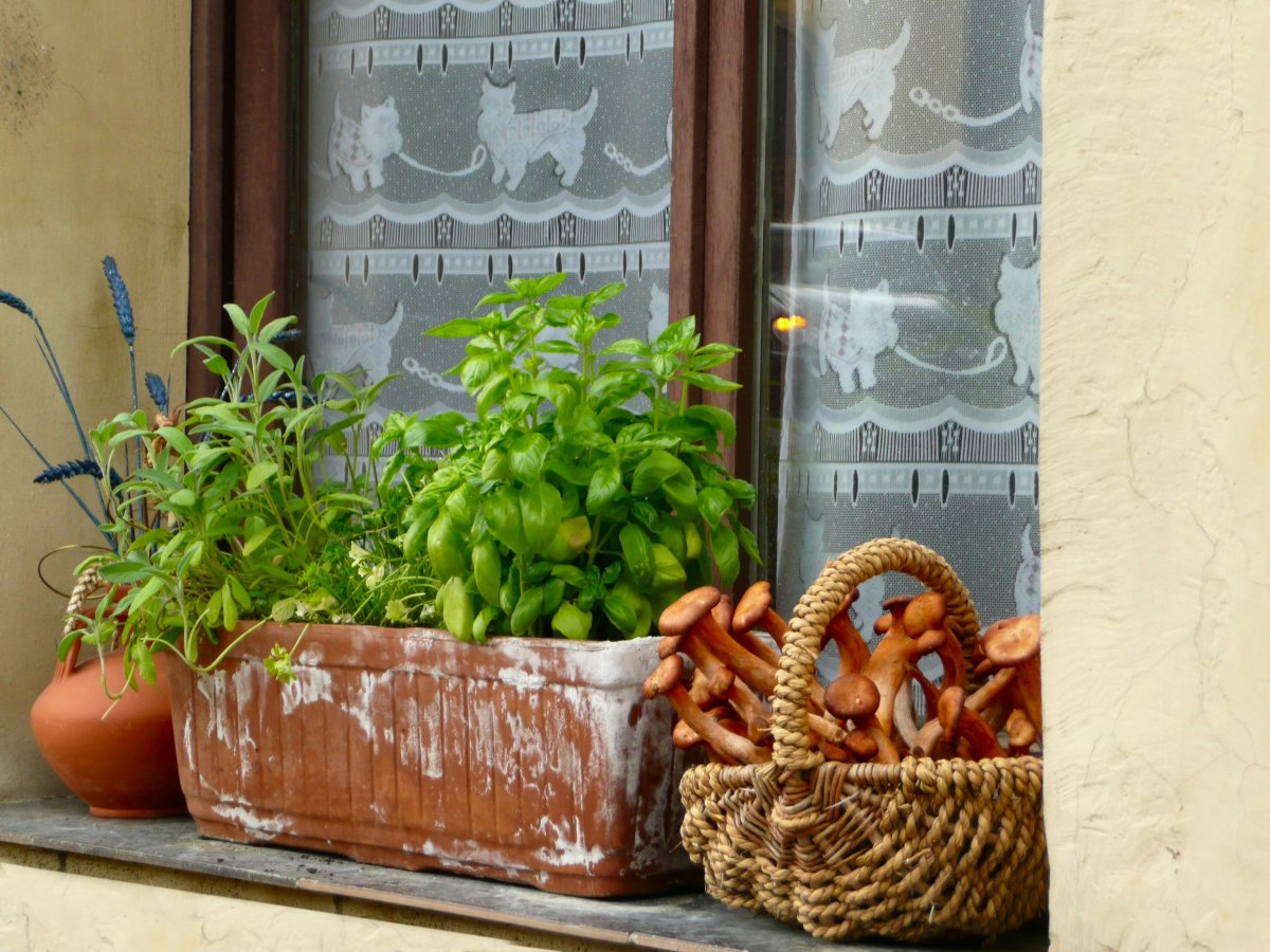 A cute window, decked with quirky, cat lace curtains, a herb planter, and a basket full of mushrooms.