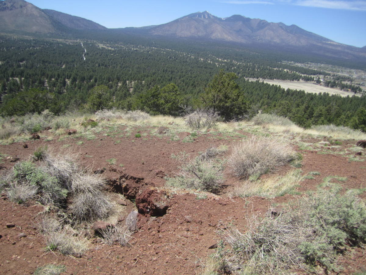A view of the San Francisco Peaks from the summit of Old Caves Crater