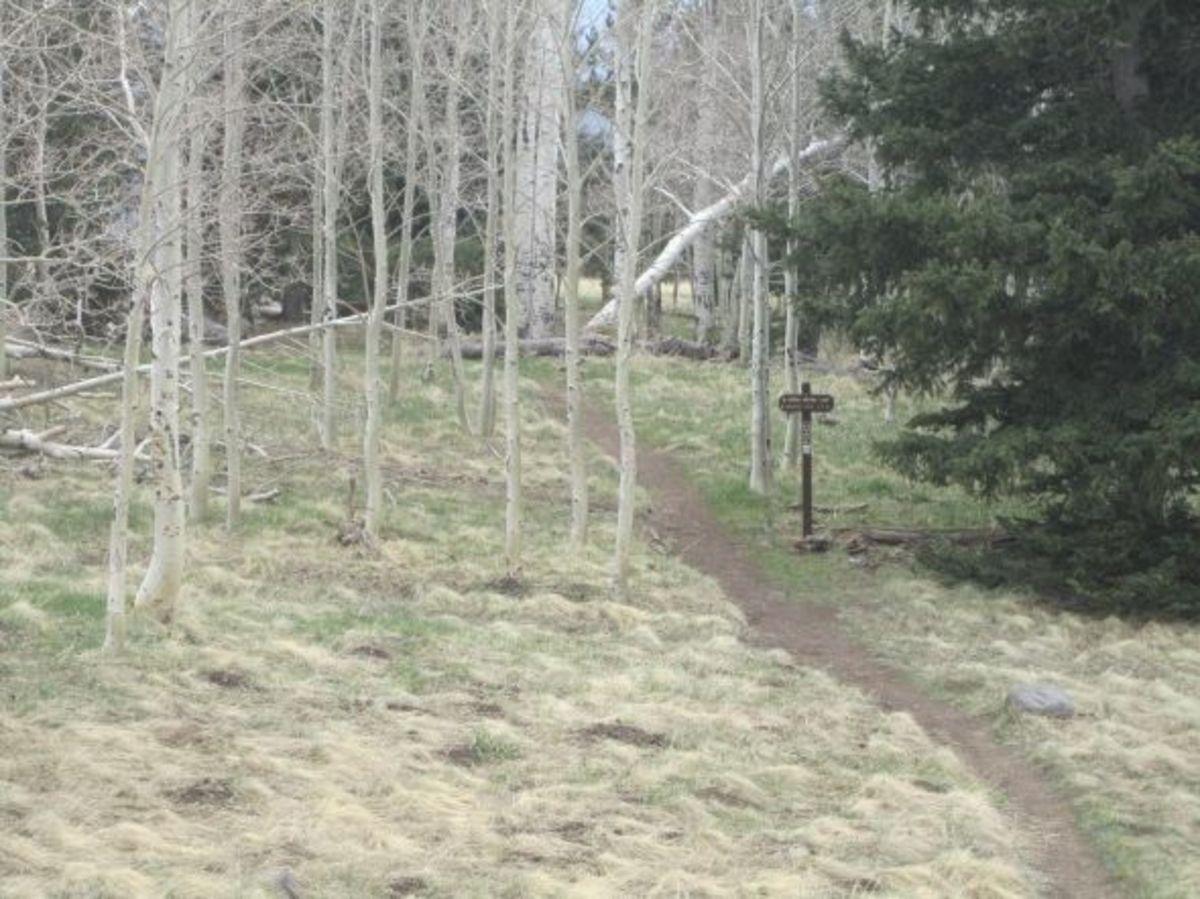 Aspen Nature Loop