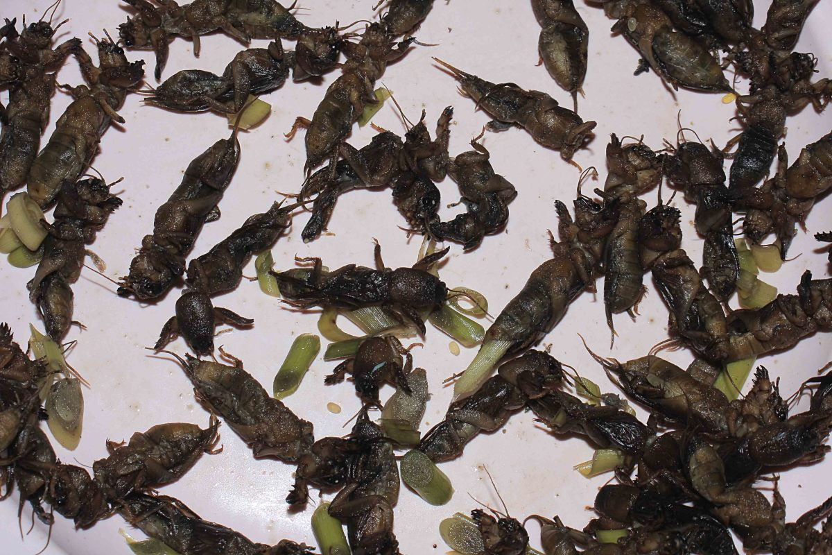 Anyone for fried crickets?