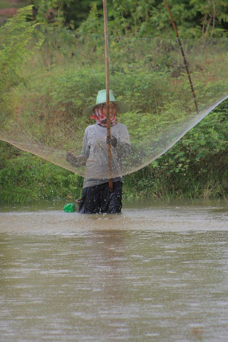Thai woman doing some net fishing in Na Sai