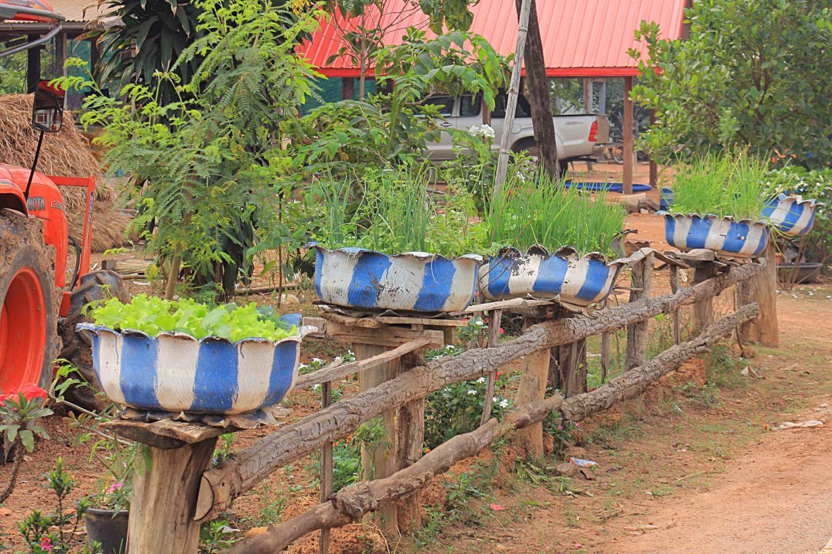 Many villagers have plant tubs made out of old tyres for growing herbs etc. Typically, the tubs are painted in the village colours, which are blue and white for Nanokhong