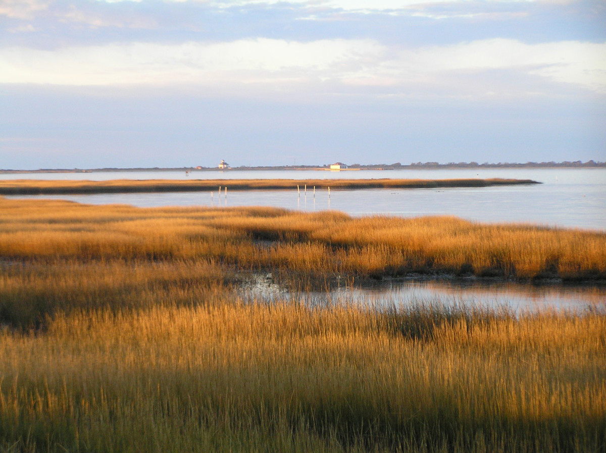 Beautiful marsh scenery of Assateague Island