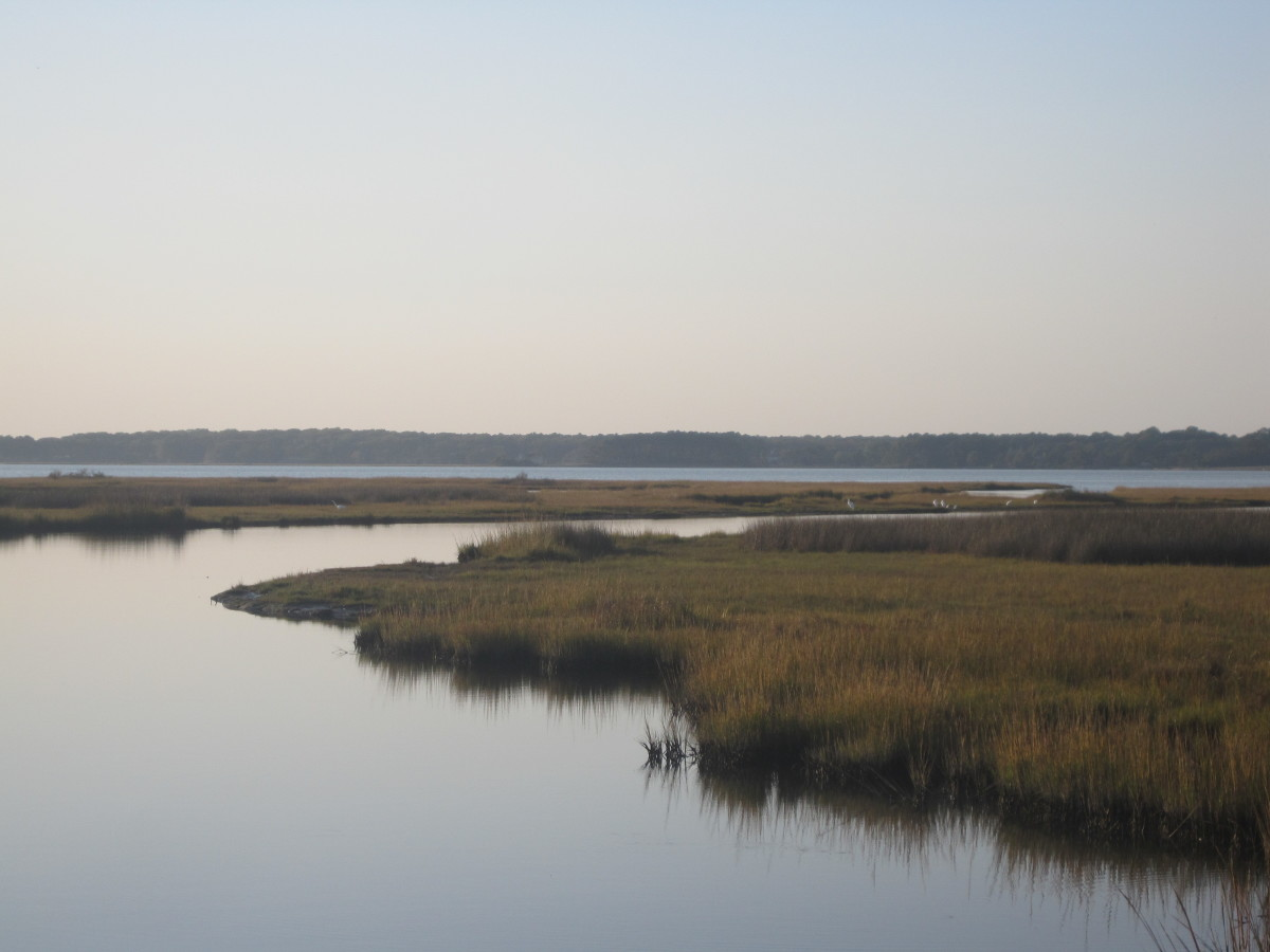The beautiful scenery of Assateague Island is similar to Chincoteague.