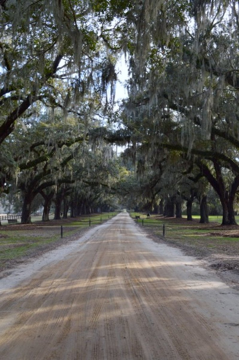 Boone Hall's Avenue of Oaks